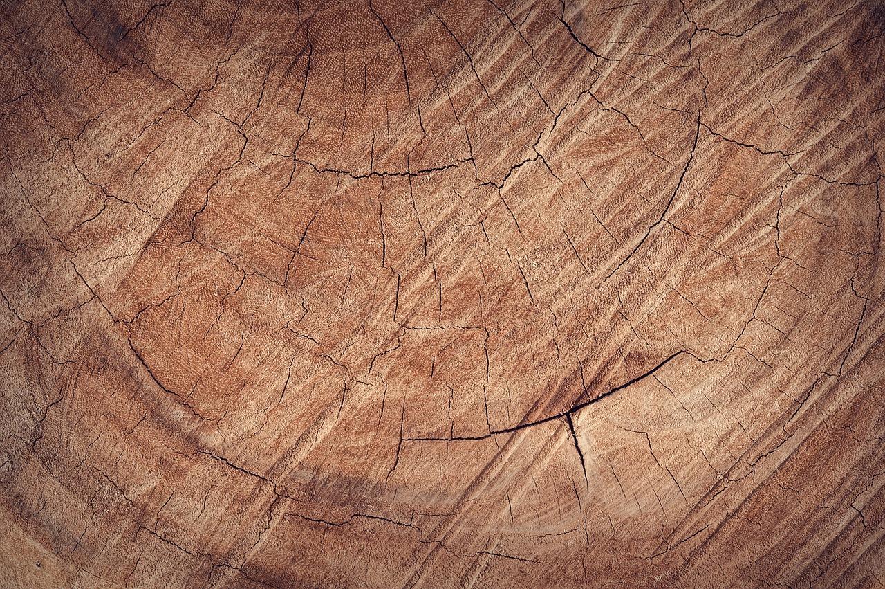 Met dit Zweedse hout kan je vrijwel alles bouwen