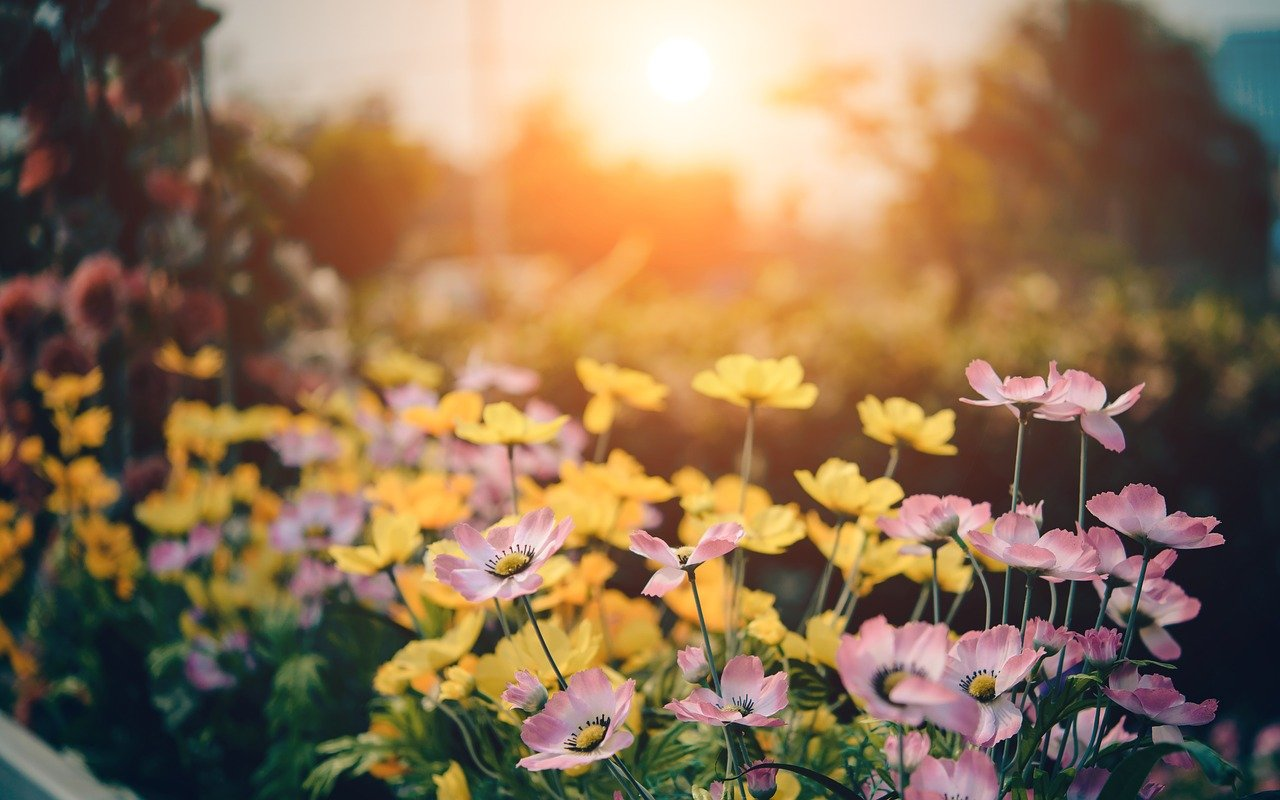 De tuin van je dromen